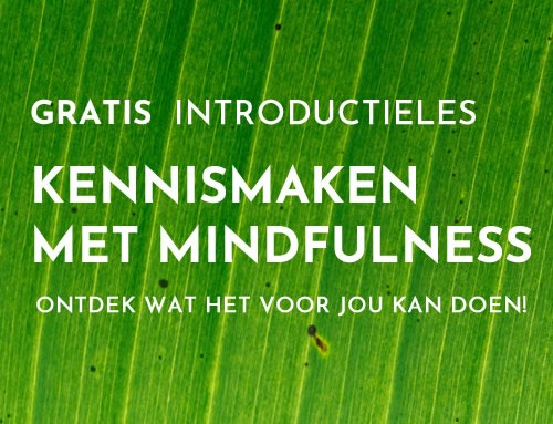 Mindfulness training door Astrid Willemsen