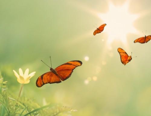 Vlinders voelen